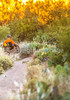 Saguaro National Park - C1-0426 - 72 ppi-3