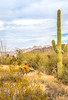 Organ Pipe Cactus National Monument - D1-C2-0090 - 72 ppi