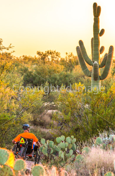 Saguaro National Park Cactus Forest Trail - C1-0347 - 72 ppi-2