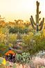 Saguaro National Park Cactus Forest Trail - C1-0347 - 72 ppi-2