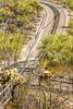 Organ Pipe Cactus National Monument - D1-C1-0228 - 72 ppi