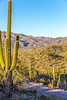 Saguaro National Park - C1-0057 - 72 ppi