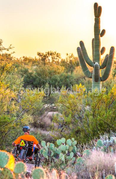 Saguaro National Park, Cactus Forest Trail - C1-0347 - 72 ppi-5