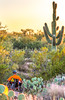 Saguaro National Park, Cactus Forest Trail - C1-0347 - 72 ppi-5