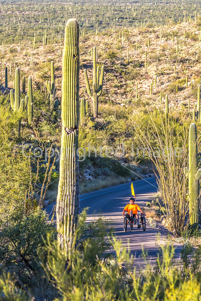Saguaro National Park - C2-0030 - 72 ppi