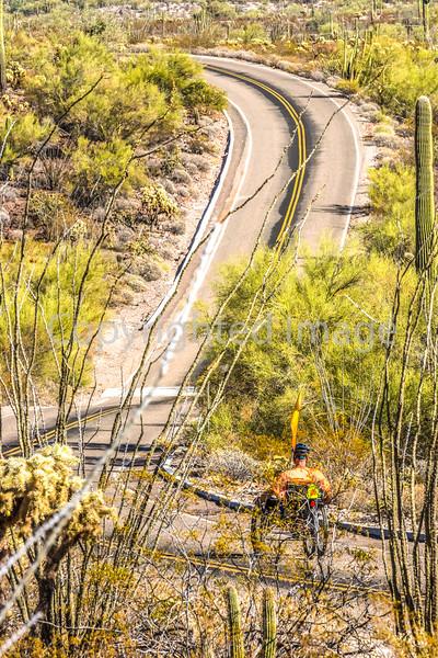 Organ Pipe Cactus National Monument - D1-C1-0222 - 72 ppi