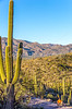 Saguaro National Park - C1-0057 - 72 ppi-2