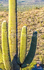 Saguaro National Park - C1-0004 - 72 ppi