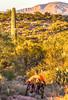 Saguaro National Park - C1-0186 - 72 ppi-2