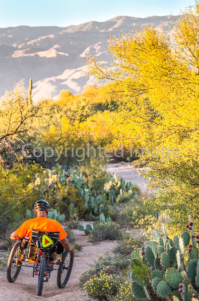 Sunset on mountain bike trail at Saguaro Nat'l Park - C3-0071 - 72 ppi