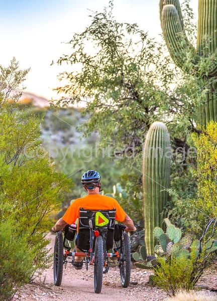 Saguaro National Park - C1-0262 - 72 ppi