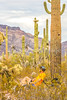 Organ Pipe Cactus National Monument - D1-C1-0076 - 72 ppi