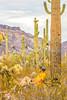 Organ Pipe Cactus National Monument - D1-C1-0076 - 72 ppi