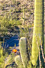 Saguaro National Park - C2-0020 - 72 ppi