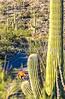 Saguaro National Park - C2-0020 - 72 ppi