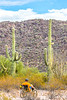 Organ Pipe Cactus National Monument - D1-C1-0010 - 72 ppi
