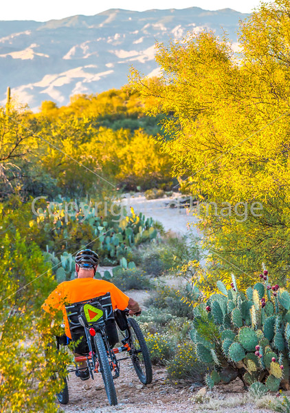 Sunset on mountain bike trail at Saguaro Nat'l Park - C3-0060 - 72 ppi