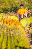 Saguaro National Park - C1-0123 - 72 ppi-2