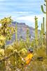 Organ Pipe Cactus National Monument - D1-C1-0078 - 72 ppi