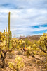 Organ Pipe Cactus National Monument - D1-C2-0066 - 72 ppi