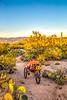 Saguaro National Park - C3-2 - 72 ppi-7