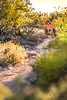 Saguaro National Park - C1-0126 - 72 ppi