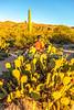 Saguaro National Park - C3-0034 - 72 ppi