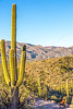 Saguaro National Park - C1-0065 - 72 ppi
