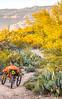 Saguaro National Park - C3-2 - 72 ppi-5