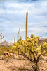 Organ Pipe Cactus National Monument - D1-C2-0059 - 72 ppi