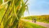 Missouri - BikeMO 2015 - C1-0189 - 72 ppi-2