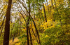 Katy Trail near Rocheport, MO - C2-0185 - 72 ppi-2