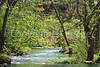 Alley Spring, Ozark Nat'l Scenic Riverways -0017 - 72 ppi