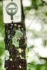 Taum Sauk Mountain State Park, Missouri; Ozark Trail sign - 7 - 72 ppi