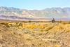 Death Valley National Park - D1-C1#2-30091 - 72 ppi