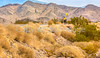 Death Valley National Park - D1-C1#2-30061 - 72 ppi-2