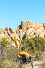 Joshua Tree National Park - 2016 -D1- C1-0005 - 72 ppi