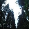 Giro d Yosemite - Day 4 (1)