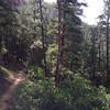 Segment 1 trail