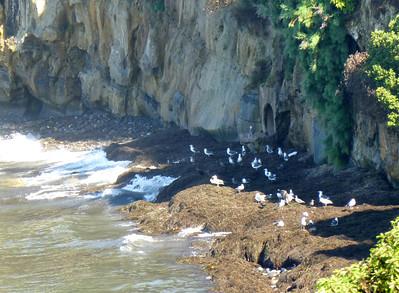 LJ Coast from Hermosa Park 120818 P2500695