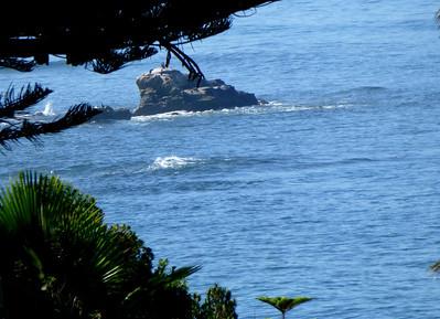 Birds on Birdrock LJ Coast 120818 P2500705