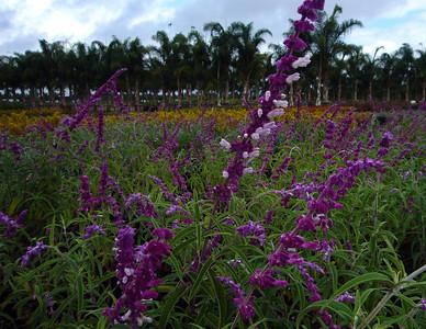 Nursery trees flowers071013 crbP1160314
