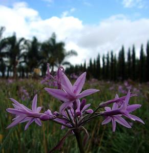 Nursery flowers 071013 crbP1160313