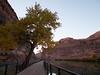 Goose Island Trail. Moab, UT