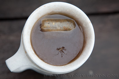 Silly. Skeeters can't drink tea.