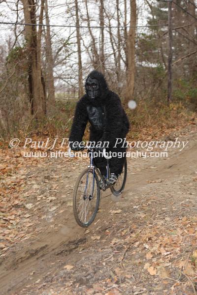 Gorilla on bike