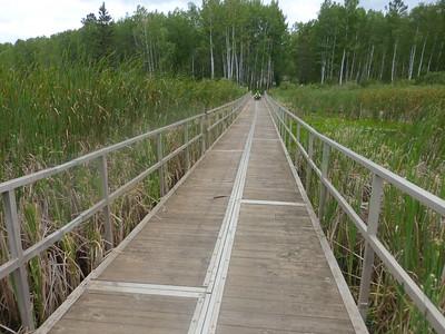 Crossing a marshy area