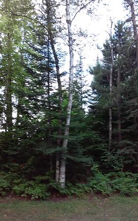Minnesota woods at Eveleth Veteran's Park campground