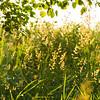 Grass in summer morning