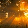 Morning Tree Fog